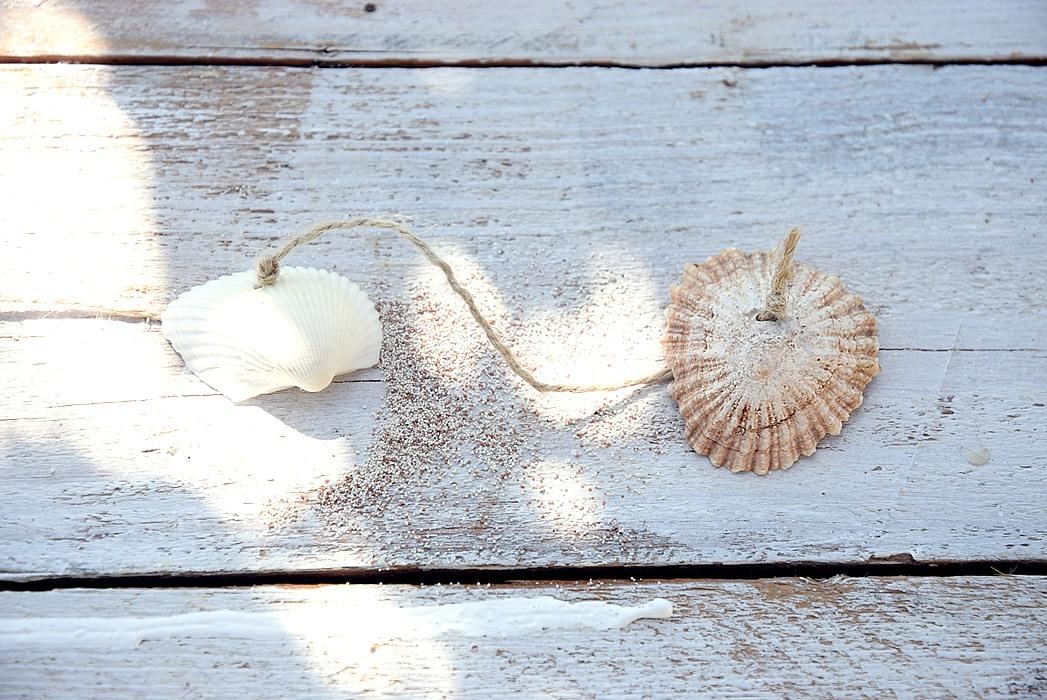 Zusammengebundene Muscheln