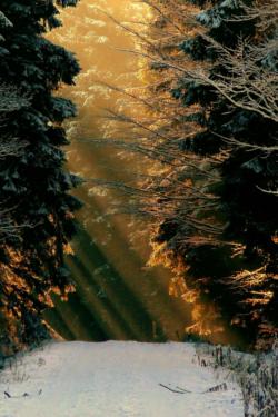 Bäume im Wald mit Schnee