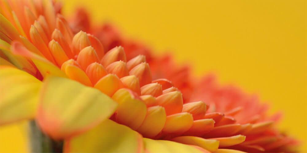 Leiner Tuchkollektion Gelb bis Rot