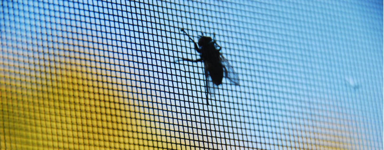insektenschutz und andere tipps f r einen ruhigen schlaf. Black Bedroom Furniture Sets. Home Design Ideas