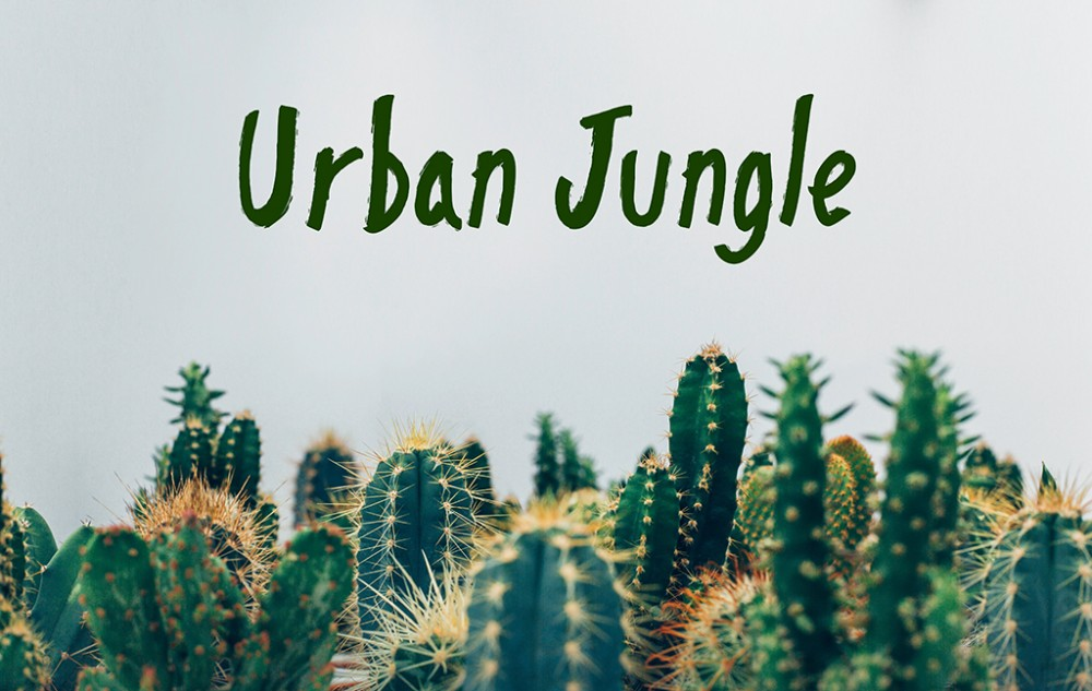 urban jungle bringt den urwald in die wohnung. Black Bedroom Furniture Sets. Home Design Ideas
